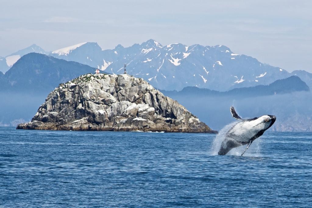 balene ricerca Antartide