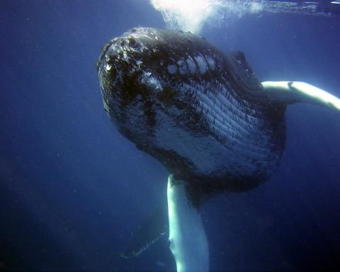 balene ricerca